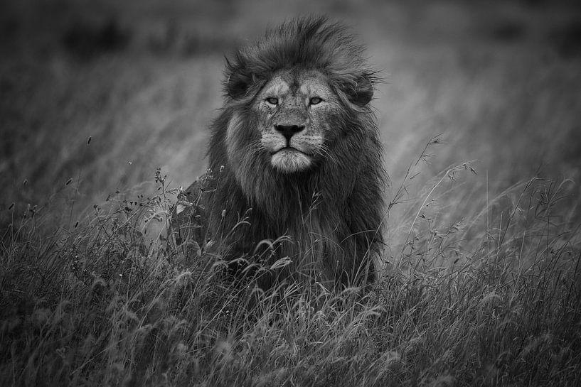 König der Löwen, Mohammed Alnaser von 1x