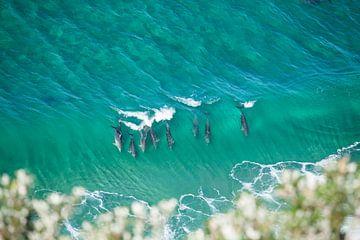Delfine Surfen am östlichsten Punkt des australischen Festlandes von Jiri Viehmann
