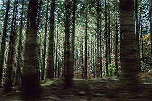 Bäume van Martn Bondzio