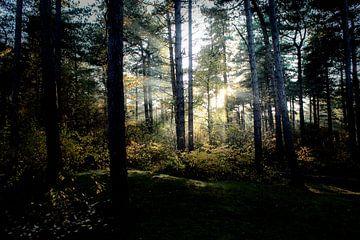 Zonsopkomst door de bomen van Malou van Gorp
