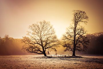 Cold sunrise van Joost Lagerweij