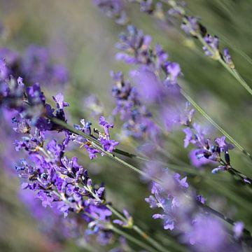 Summer Feelings II - Rosen & Lavendel von Ella Schnur