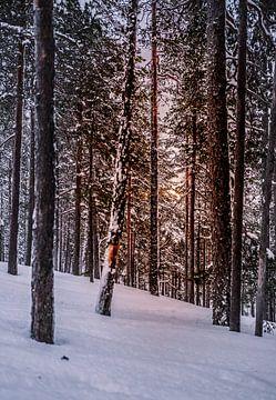 Wald in Finnisch-Lappland von Suzanne De Boer - Mateijsen