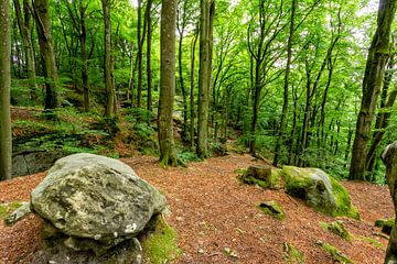 Mullerthal Trail V