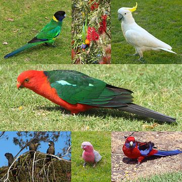 Australische papegaaien van Ines Porada
