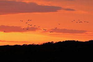 Vogels in de zonsondergang van