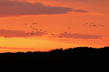 Vogels in de zonsondergang van Jannie Domburg van Woudenberg