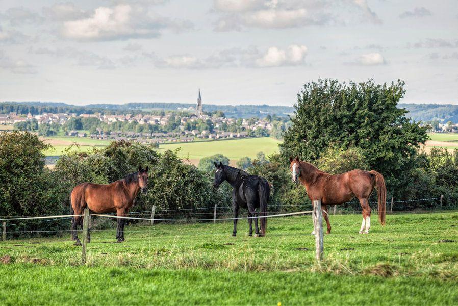 Paarden in de wei met uitzicht op Vijlen van John Kreukniet