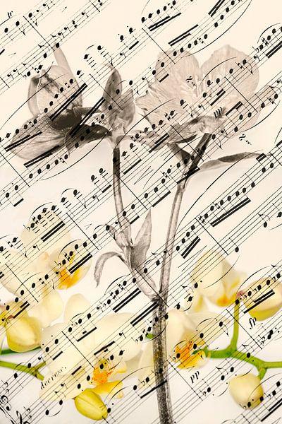 Frühlingslied von Hanneke Luit