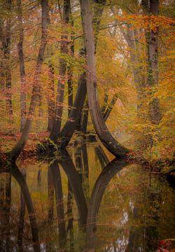 Twickel-Bäume von Ivor Baak