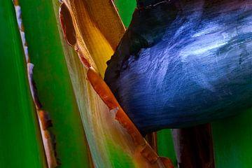 Blau 2 von Colors of the Jungle by Simon Kuyvenhoven