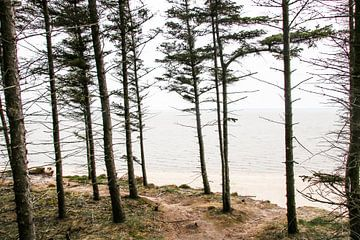 Bäume am Meer von Jasmijn Visser