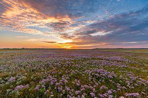 Slufter Texel Zonsondergang  bloeiend lamsoor van Texel360Fotografie Richard Heerschap