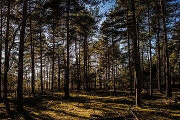 Blauwe lucht in het bos op een zonnige dag van Linsey Aandewiel-Marijnen