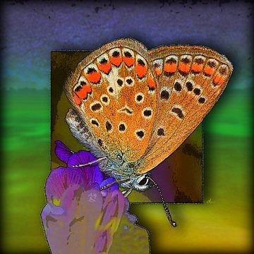 Vlinder | Hauhechel blauw van Dirk H. Wendt