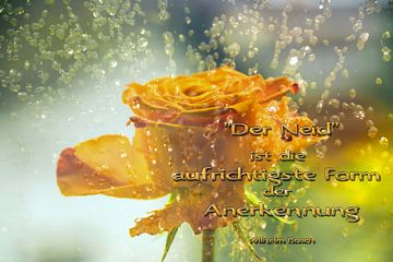 Sprüche - Der Neid ist......... von Christine Nöhmeier
