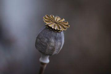 Poppy / Poppy [Poppy] von Isabel van Veen