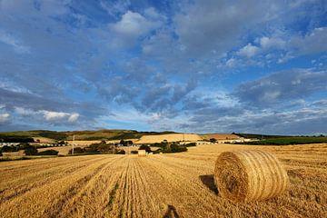 Schotland, een hooiland  aan de kust von Marian Klerx