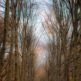 Avec mon regard au fond de la forêt sur Mascha Looije