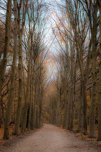 Met mijn blik diep in het bos