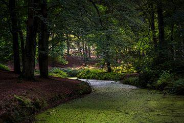 Forest van Bart Hendrix