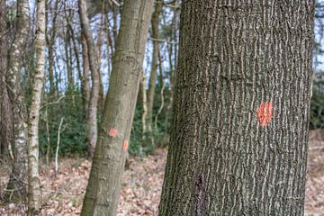Gebleste bomen in een bos van Stefan ten Pierik