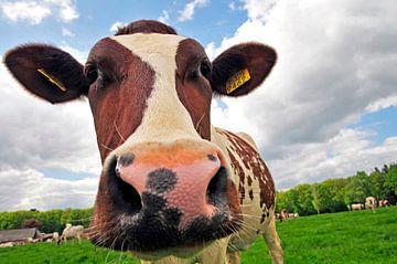 Koe in de wei van Arjan Penning