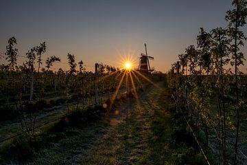 Molen Varik bij zonsopkomst von Moetwil en van Dijk - Fotografie