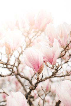Magnolia van Melissa Peltenburg