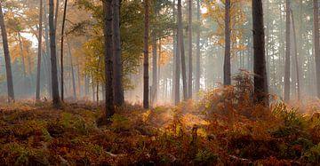 Herfst in het Mastbos van Rob Bout