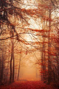 Autumn's Orange van Thomas Jansen