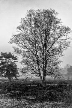 Berk in zwart wit van Jacco Bezuijen