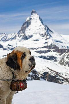 St Bernard poserend voor de Matterhorn, Zwitserland van Henk Meijer Photography