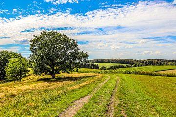Landschap vlakbij Dürres Maar, Duitsland van Lukas Coenraats