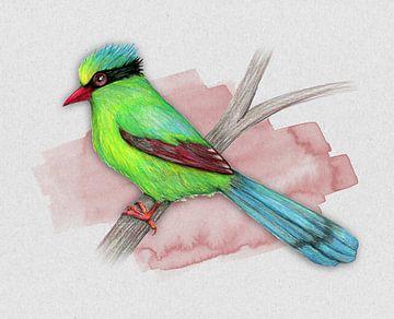Groene ekster of Groene kitta  potloodtekening van Bianca Wisseloo