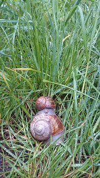 twee slakken op elkaar in het gras  van Chantal Koper
