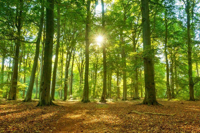 Forest love van Marc Crutzen