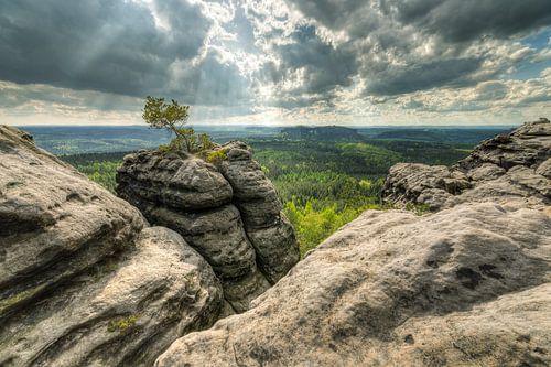 Lonely pine tree in Saxon Switzerland van Michael Valjak