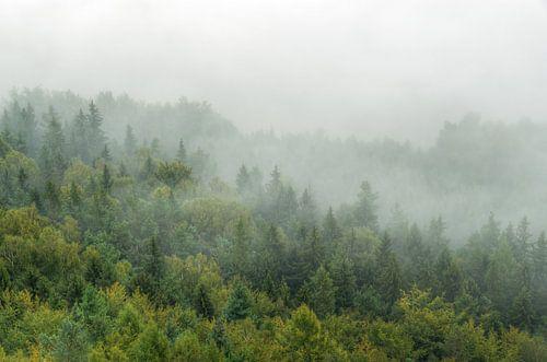 Cloud forest in Saxon Switzerland van Michael Valjak