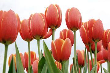 Rode tulpen in Amsterdam van Evelien Oerlemans