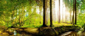 Wunderschöne Natur von Günter Albers