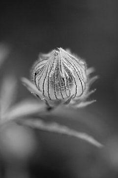 Laterne der Drei-Stunden-Blume von Tot Kijk Fotografie: natuur aan de muur