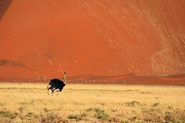 Struisvogel in woestijn landschap van Namibie van Bobsphotography