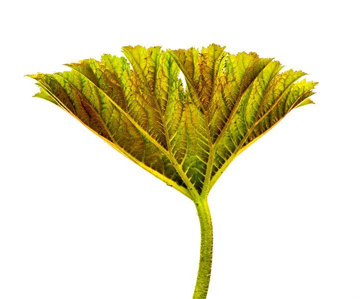 Plant restructured van Piet de Winter