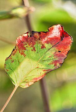 Mooie verlichte blad in de herfst kleuren in een groen bos van Tony Vingerhoets