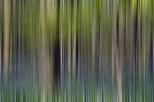 Hallerbos Abstract van