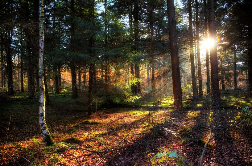 Spanderswoud herfst zonsondergang van Dennis van de Water