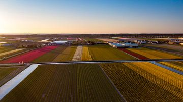 Bollenvelden Noordwijkerhout van Rene Ouwerkerk
