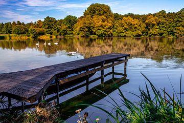 Splendeur d'automne au bord de l'eau sur Sjors Gijsbers