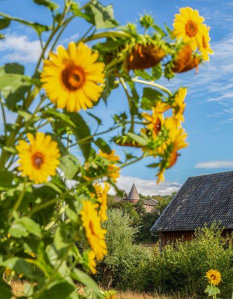 Zonnebloemen bij Mamelis van John Kreukniet